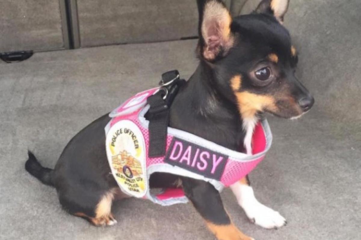 La storia di Daisy