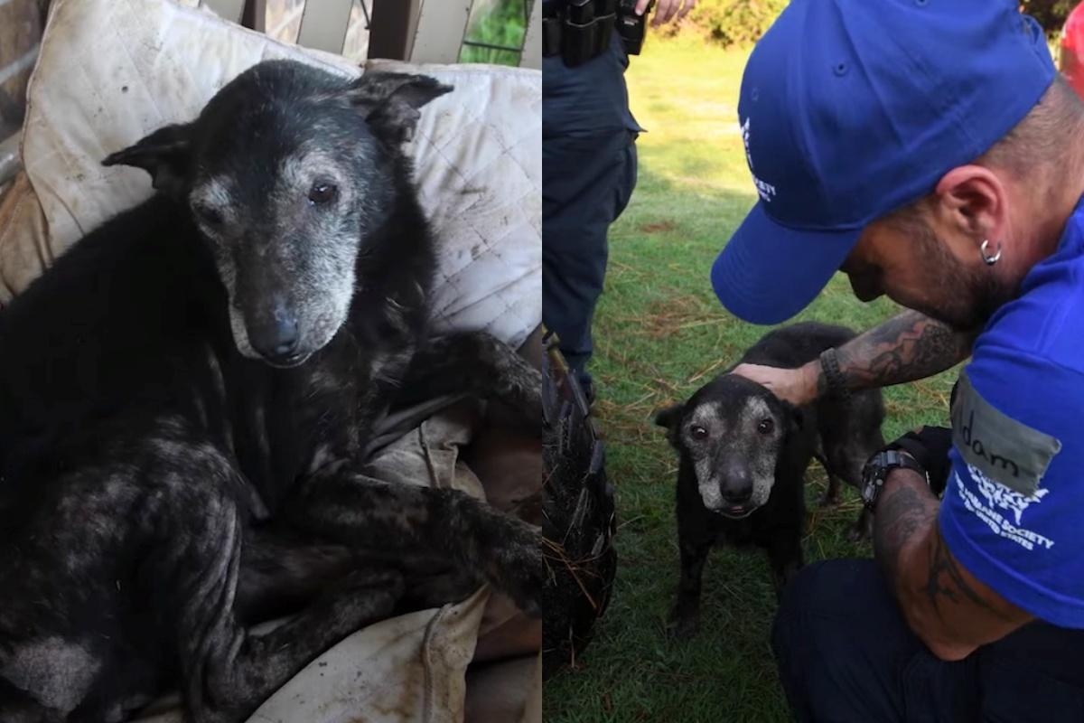 Elsie, la cagnolina salvata dalla sporcizia
