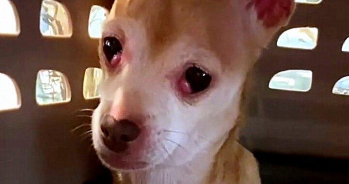 Heather, la cagnolina impaurita tornata ad avere fiducia negli umani