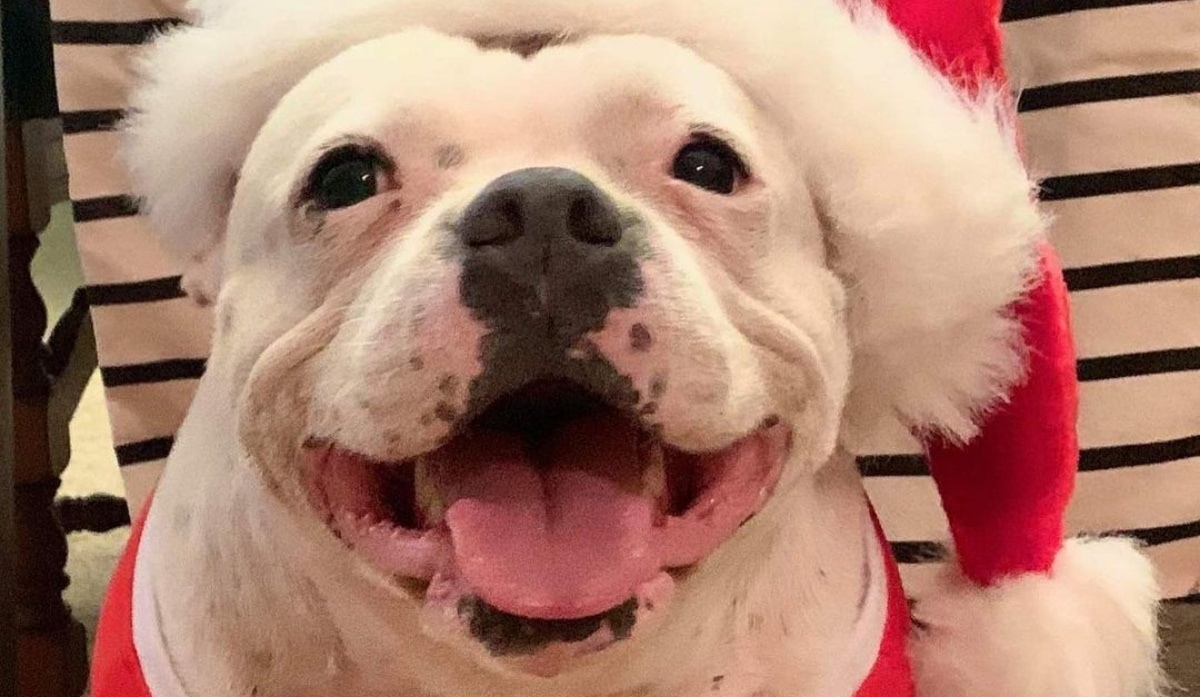 Il regalo di Natale di Hemi