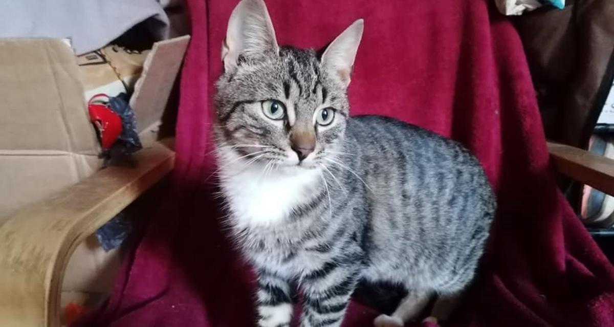 Ignas, il gatto nella macchina