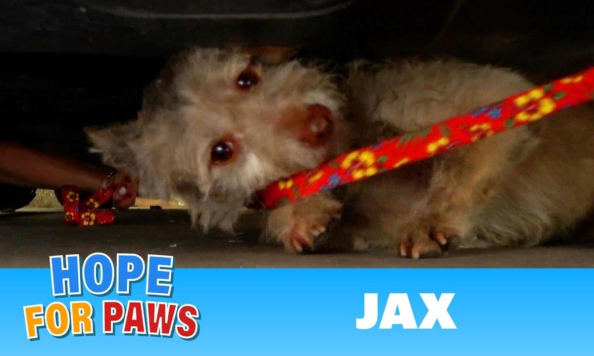 La storia del cagnolino Jax
