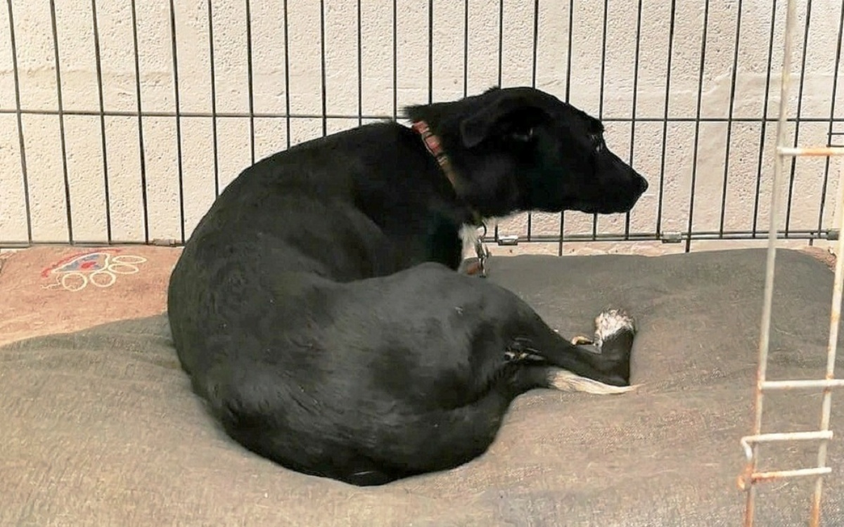 Percy: la cagnolina rinata grazie a Maggie