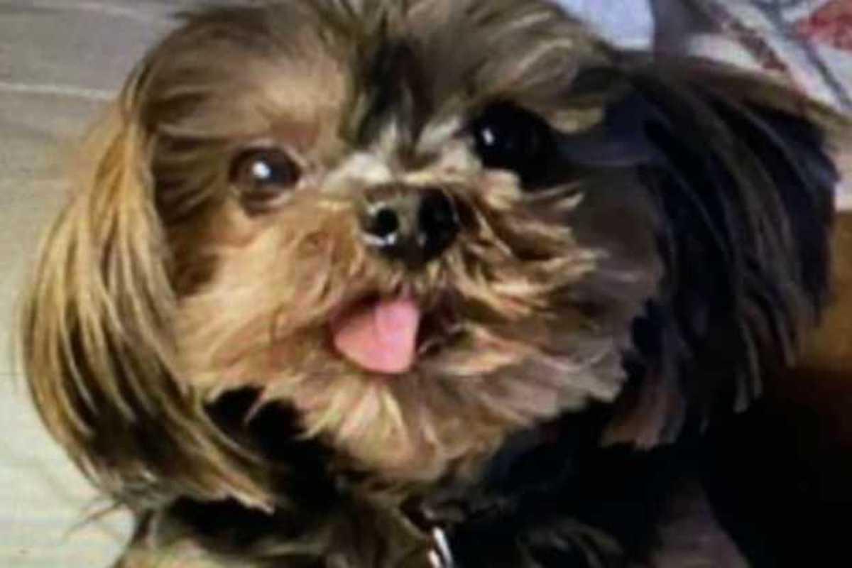 Cutie il cane di Romina Power