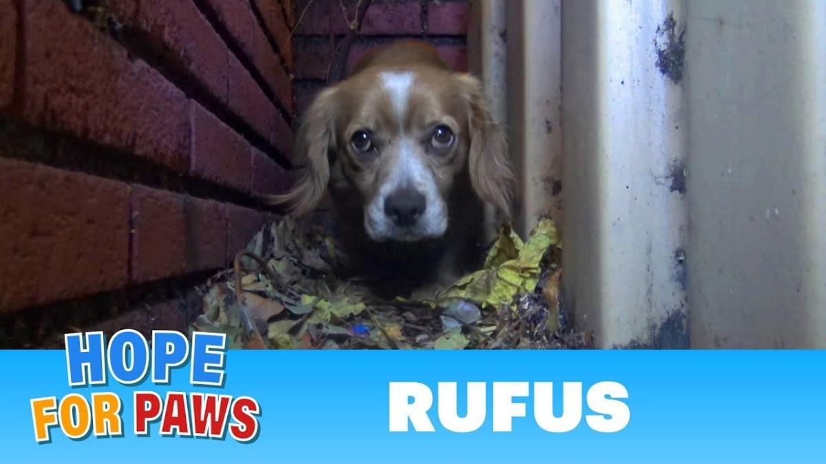 Il salvataggio di Rufus