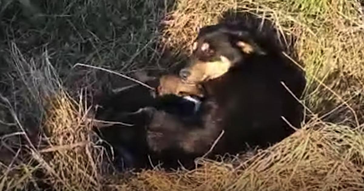 Il salvataggio di Tara e dei suoi cuccioli