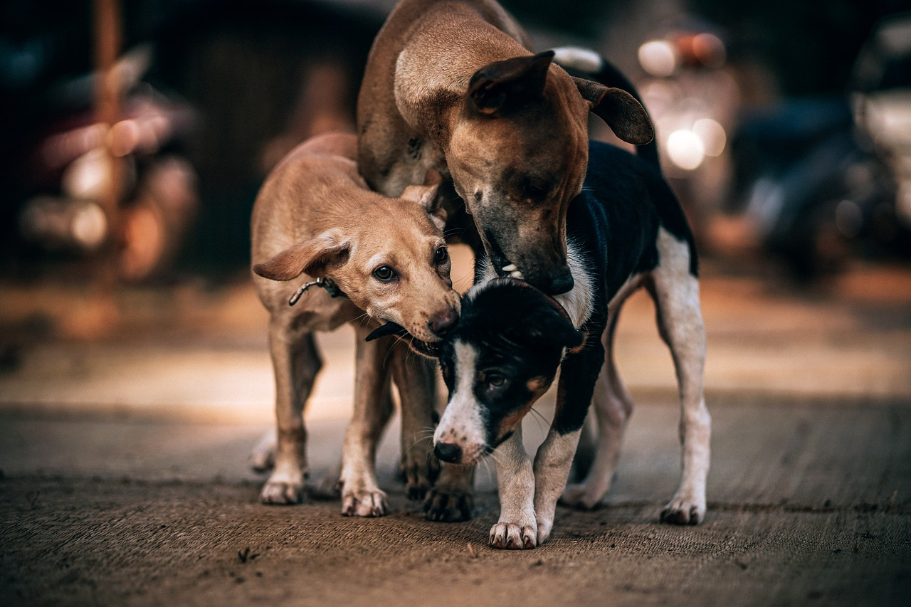 Cuccioli randagi in cerca di una casa