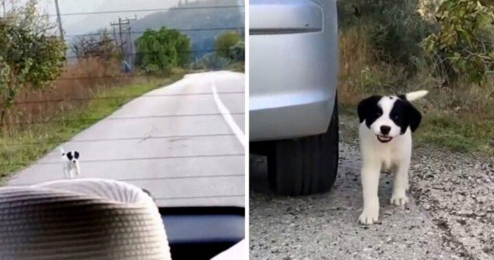 Bandit, il cagnolino salvato da una volontaria di nome Velia