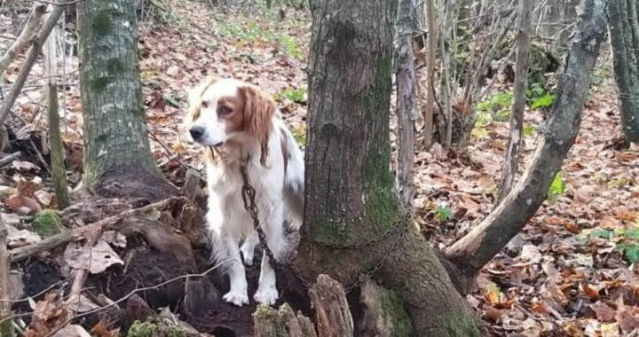 Lazio, cane abbandonato in un bosco legato con una resistente catena