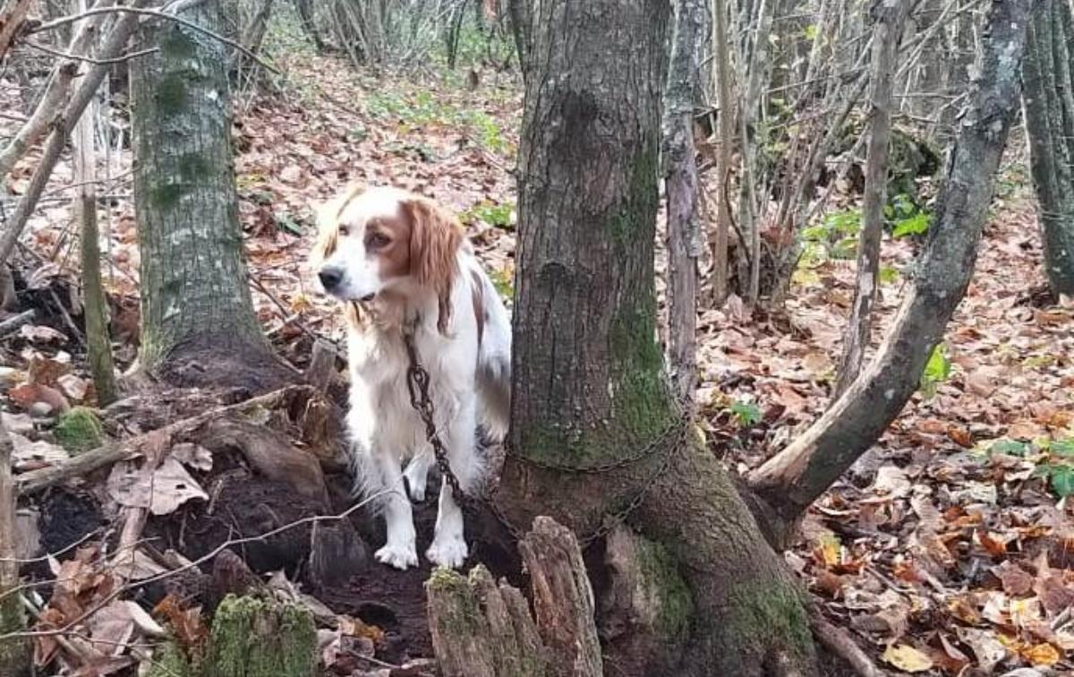 Cane abbandonato in un bosco