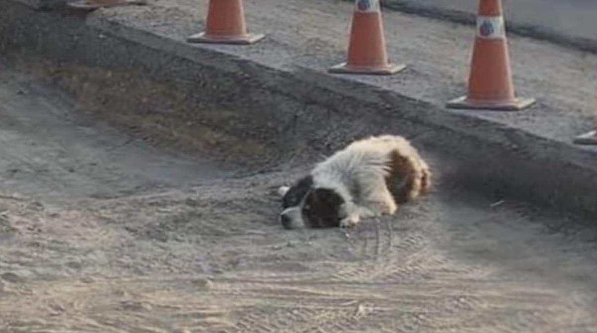 La storia di un cane abbandonato