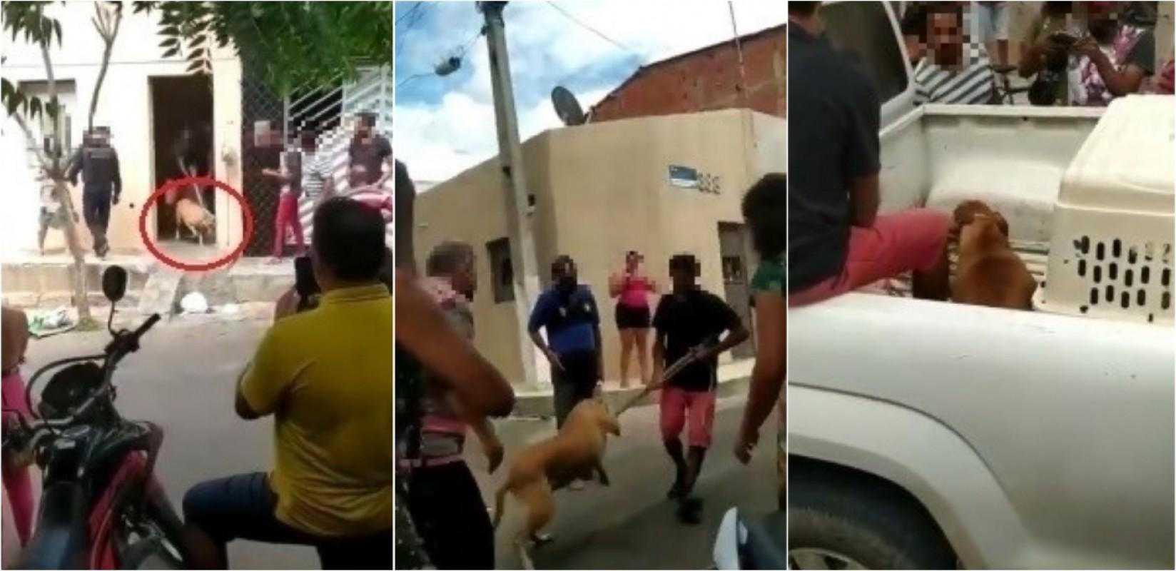 Cucciolo difende l'anziana donna