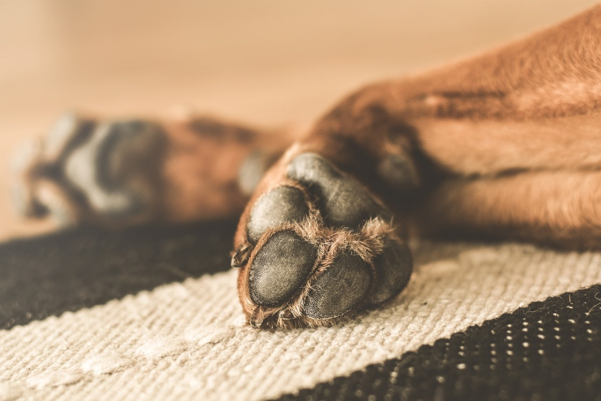 Uomo di 61 anni uccide il suo cane