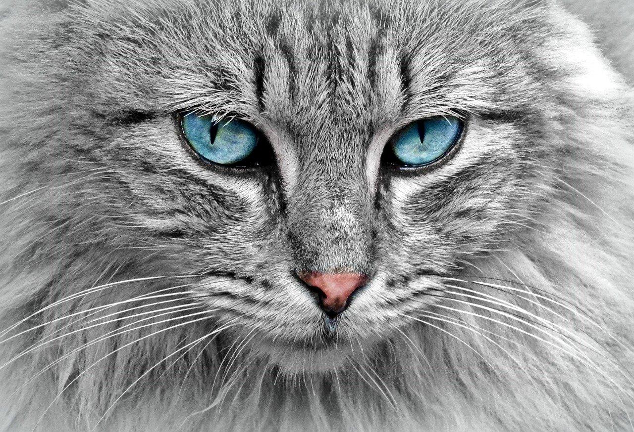 gatto senza microchip