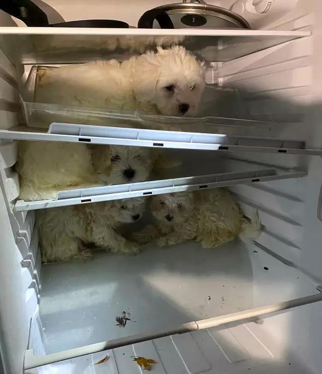 Il salvataggio dei poveri cani