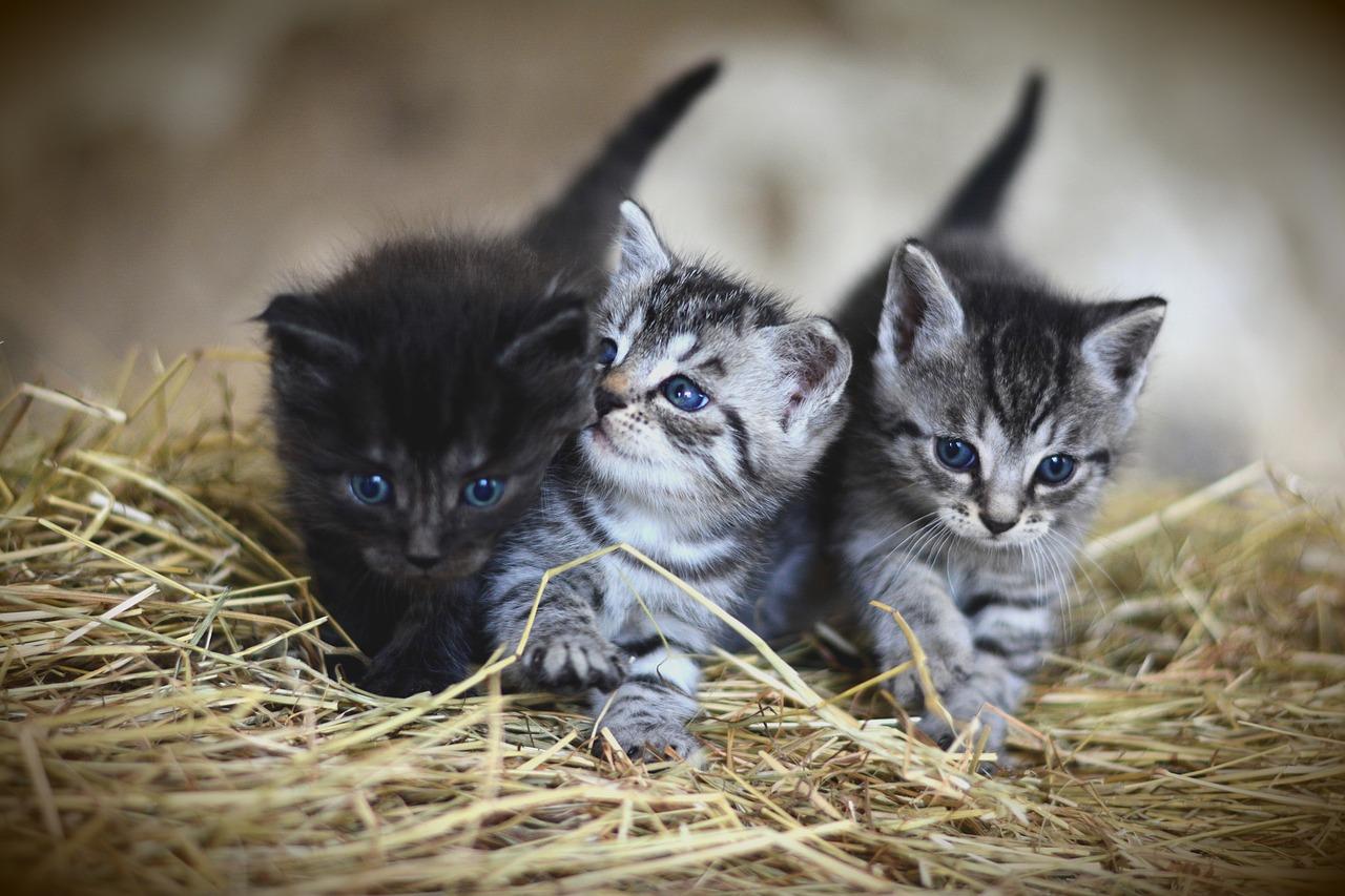 Gattini che si sono smarriti