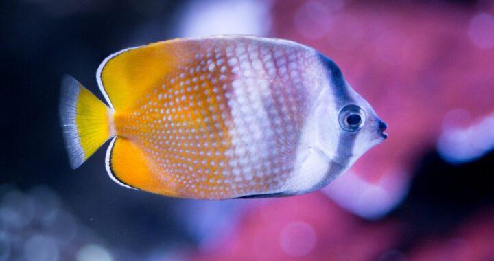 Come pulire un acquario alla perfezione: tutti i trucchi per il benessere di pesci e piante