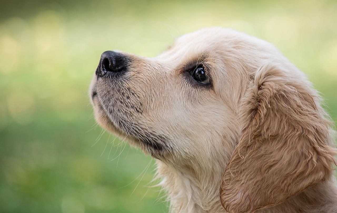 cani di quartiere