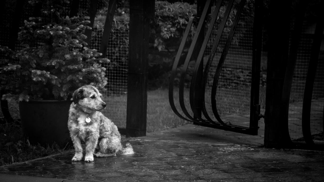 Cucciolo abbandonato sotto la pioggia