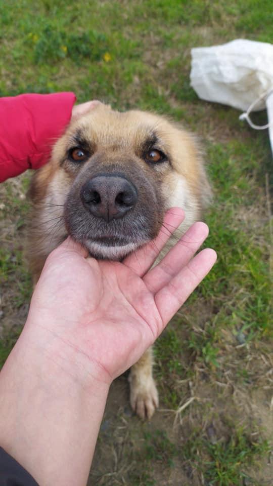Salvataggio del cane abbandonato