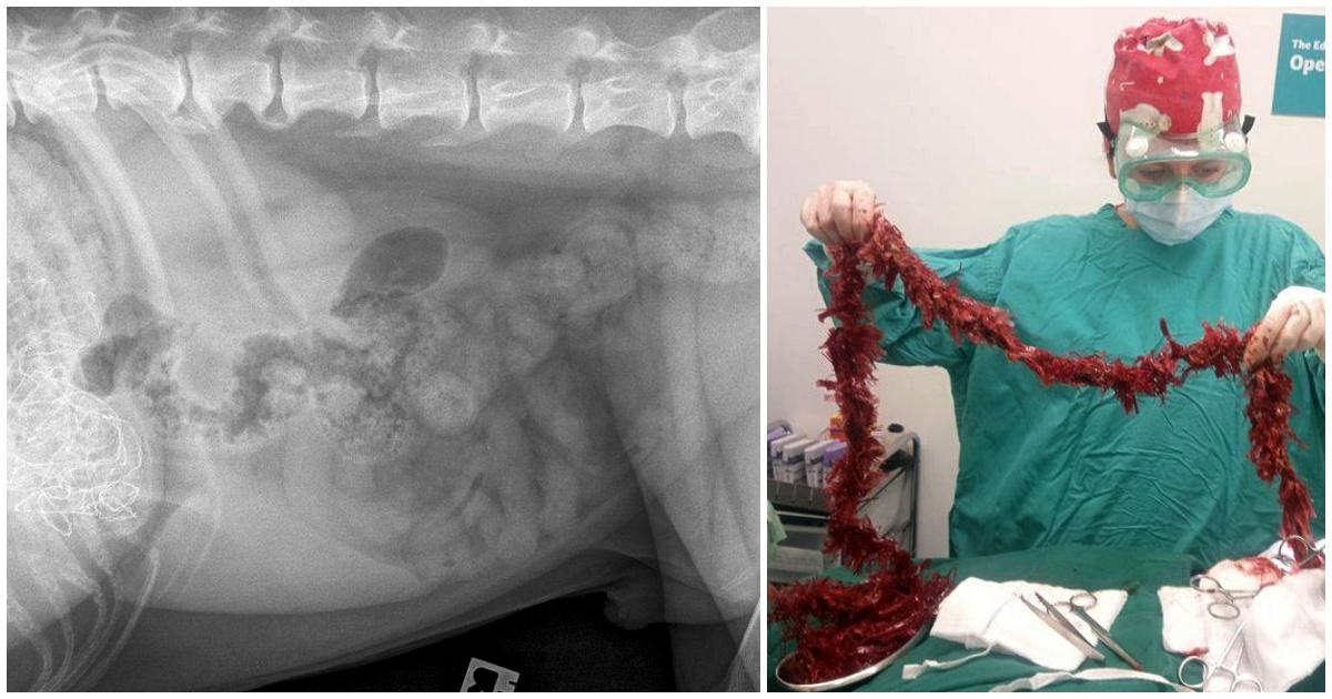 Raggi X allo stomaco di Dexter