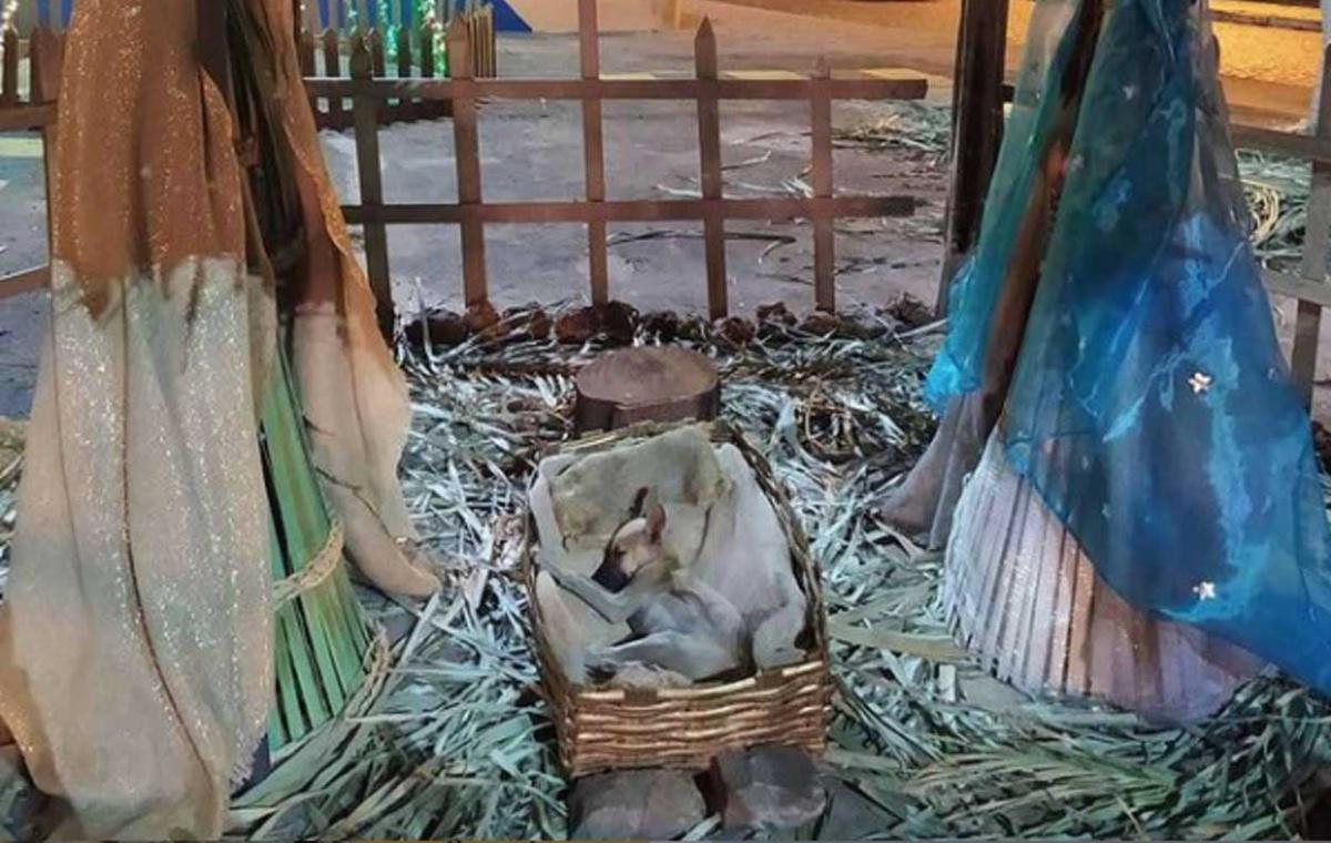 Il cucciolo randagio nella mangiatoia