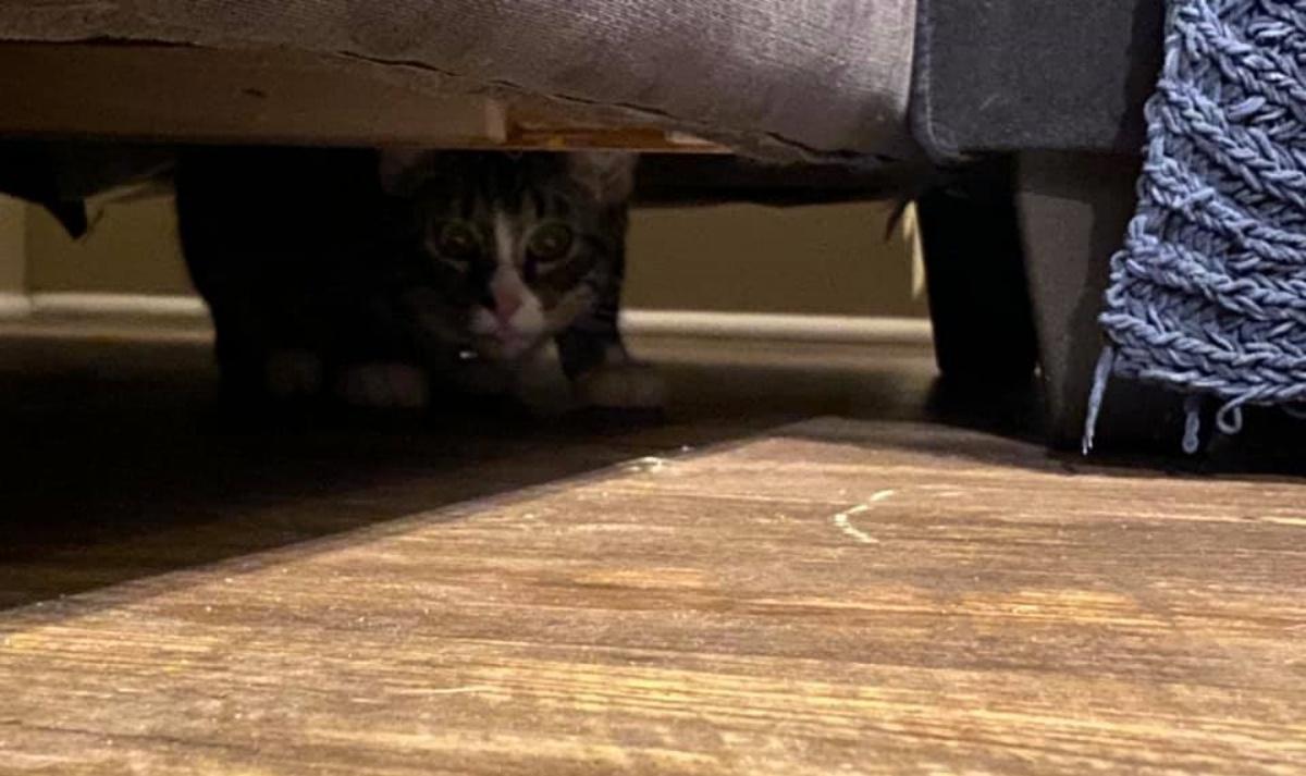 Il gatto nel divano usato