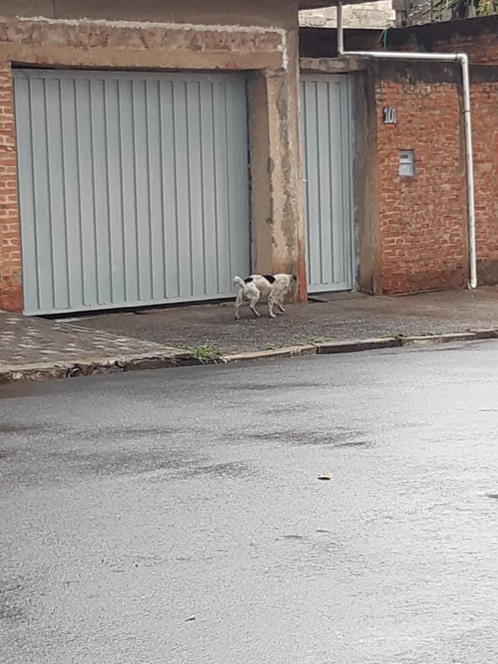 Il cane salvato da Silvana Loner