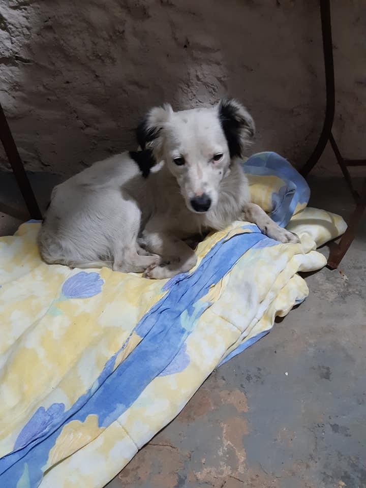 Il cucciolo salvato dalla strada