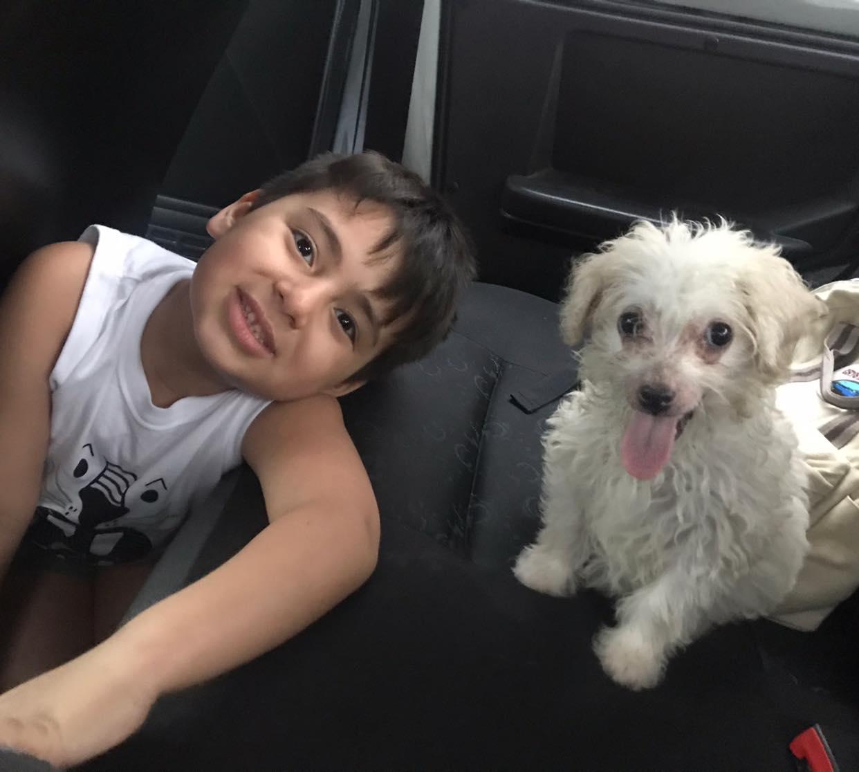 Mavis il cane salvato dalla strada