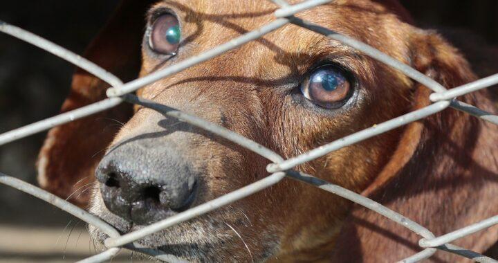 Gallipoli, cane abbandonato e legato, chiuso in una gabbia ha rischiato di morire
