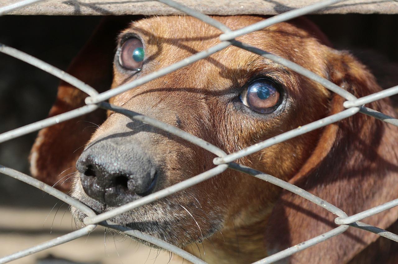 cane abbandonato e legato a Gallipoli