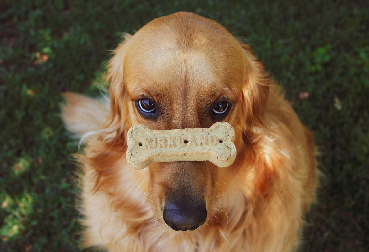 Il cane deve andare dal dottore