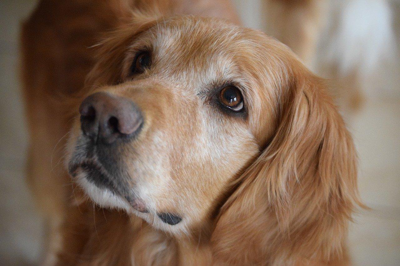 Cane con i suoi proprietari