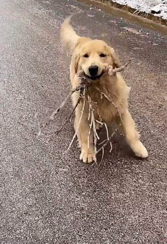 Cucciolo con ramoscelli nella bocca