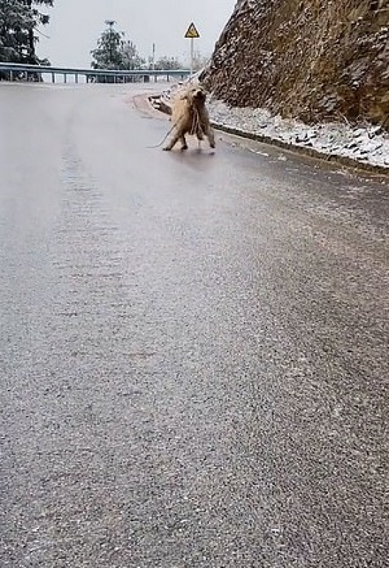 Cake il cane che cammina sul ghiaccio