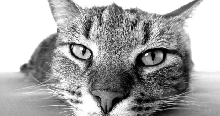 gattino chiuso con le fascette