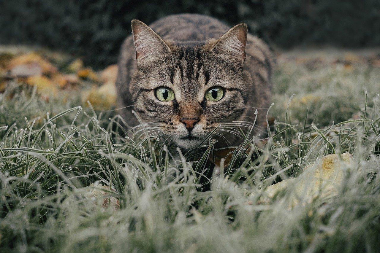 mamma nasconde i gattini