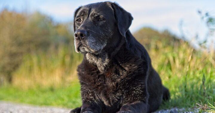 La storia del cane anziano