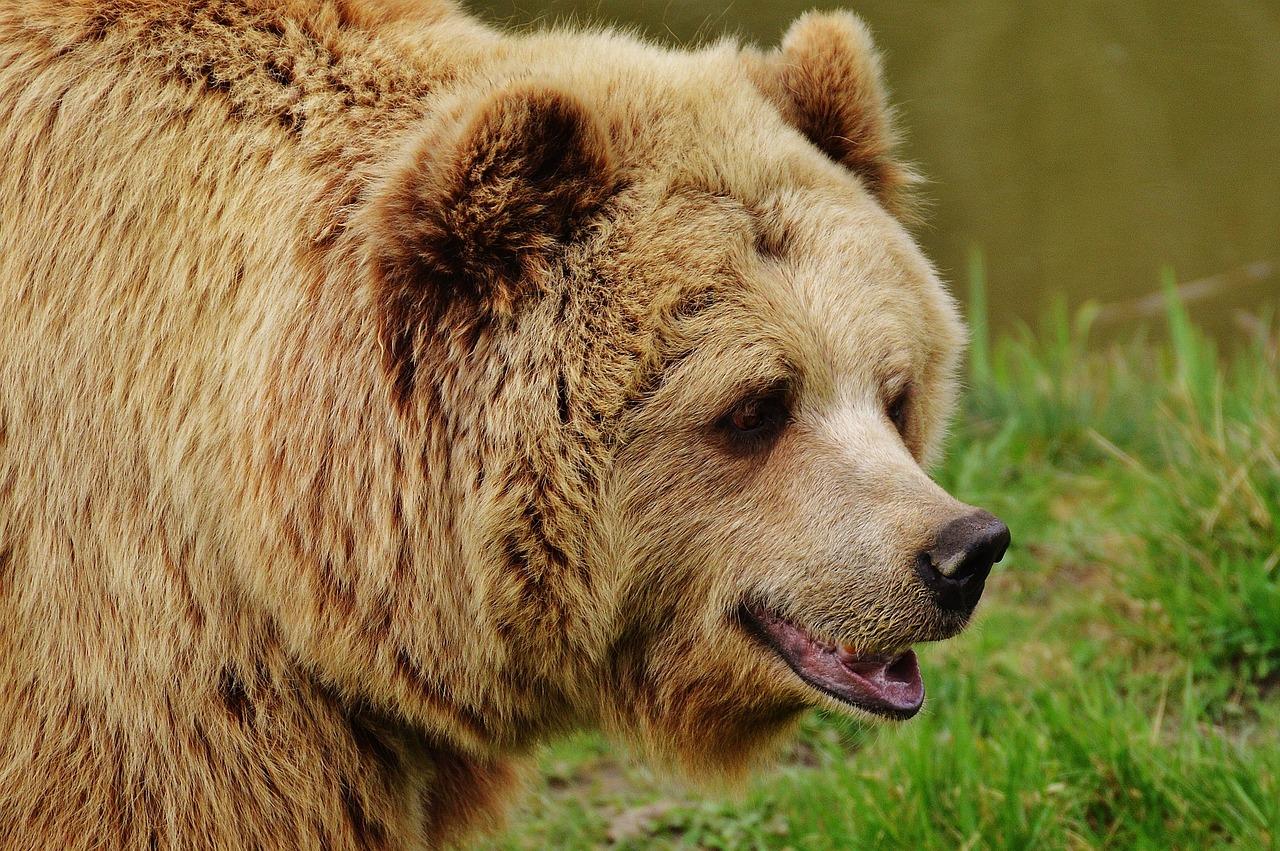 Animali selvatici cresciuti in cattività