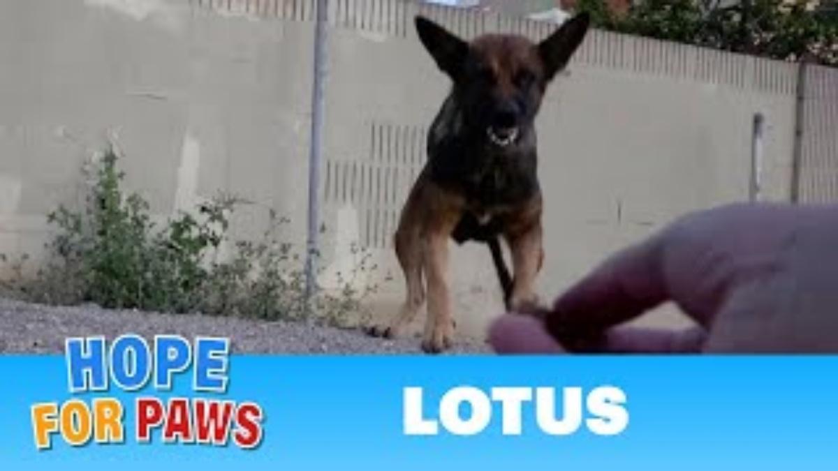 La storia di Lotus