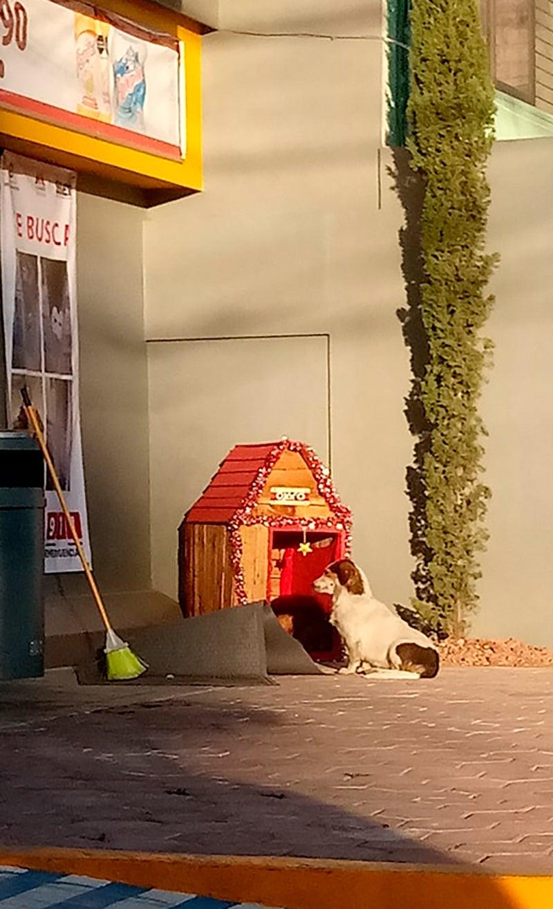 La casetta per il cane di strada Migajón