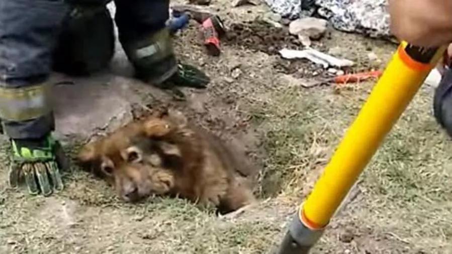 Papu il cucciolo che è stato salvato