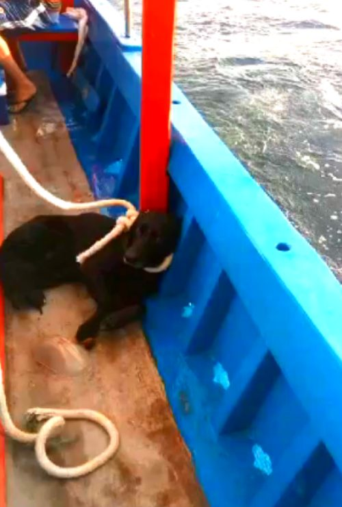 Flok salvato dai pescatori