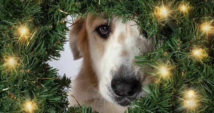 Photobombing del cane