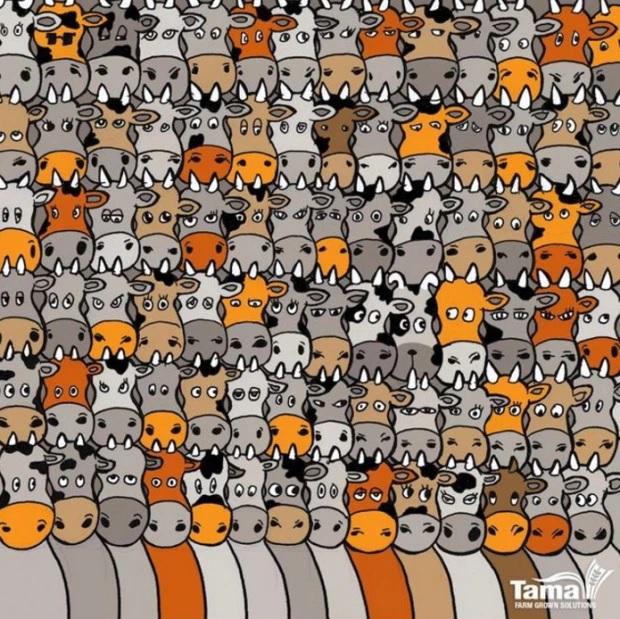 Immagine rompicapo puzzle