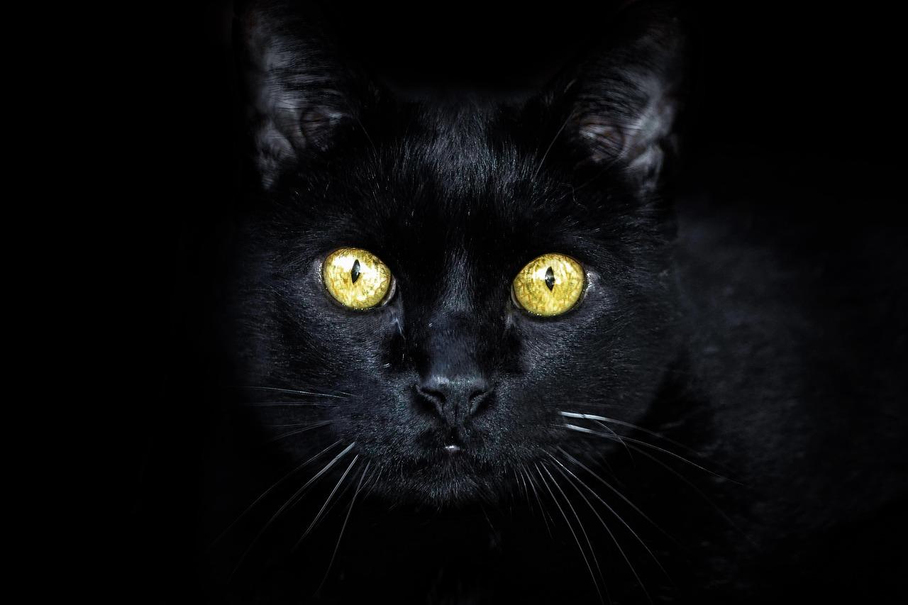 Micio nero abbandonato in strada