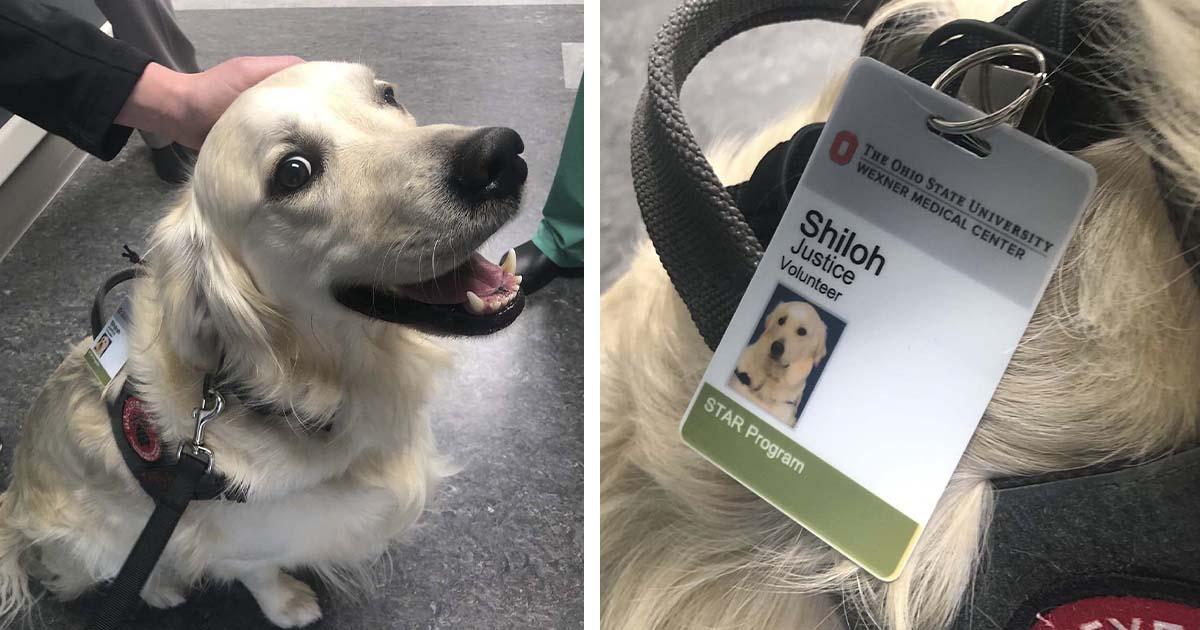 Cucciolo volontario in ospedale