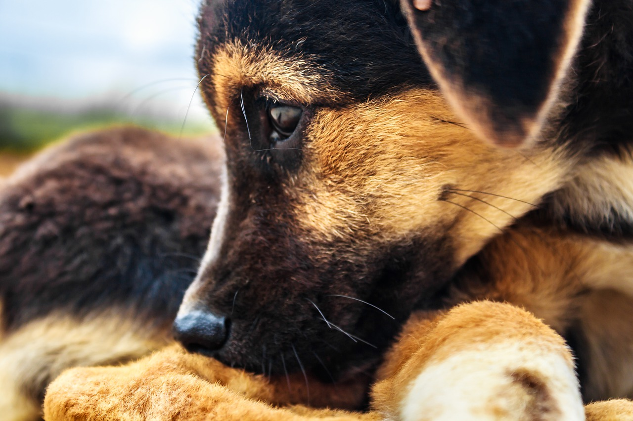 Senzatetto salva i cani