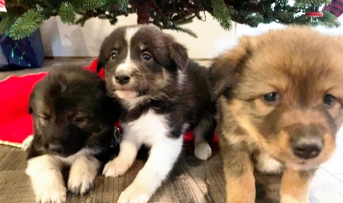 I tre cuccioli nel frigorifero